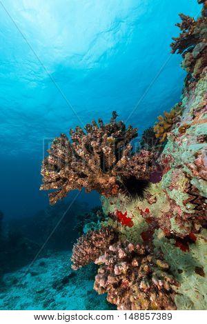 Beautiful underwater colored coral reef garden background