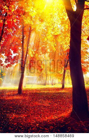 Autumn. Fall scene. Beautiful Autumnal park. Beauty nature scene. Autumn landscape, Trees and Leaves, foggy forest in Sunlight Rays