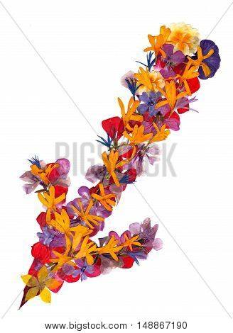 Isolated line multicolor arrows collection of elements application of dried pressing bright flowers yellow celandine geranium long stiff brown iris leaves. set for your design on a white background