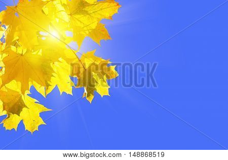 Yellow autumn maple leaves on a blue sunny sky