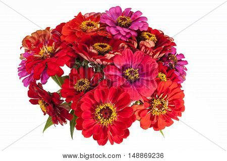 Bouquet of red and pink Zinnia flowers on white background.