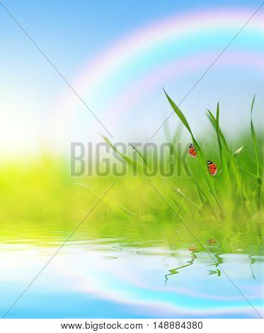 Fresh green grass with ladybugs closeup