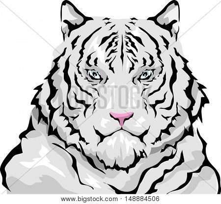 Animal Illustration Featuring a Large Siberian White Tiger with Thick, Fluffy Coat