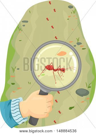Animal Illustration Featuring a Fire Ant Being Observed Under a Magnifying Glass