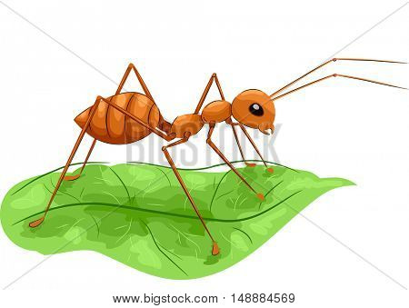 Animal Illustration Featuring a Large Fire Ant Standing on a Green Leaf