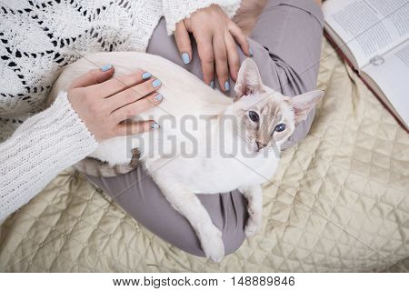 White Cat In The Hands Of Women
