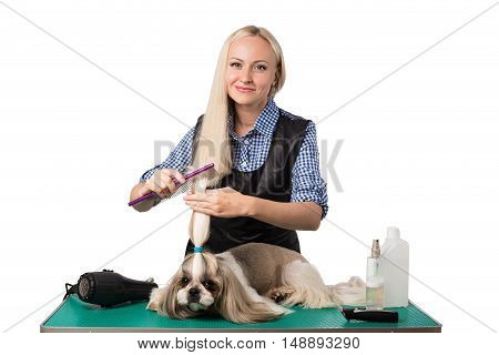 Beautiful smiling woman groomer combing little cute shih-tzu dog - isolated on white