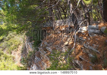 Threat To The Rocky Shore, The Safety Fence,flora