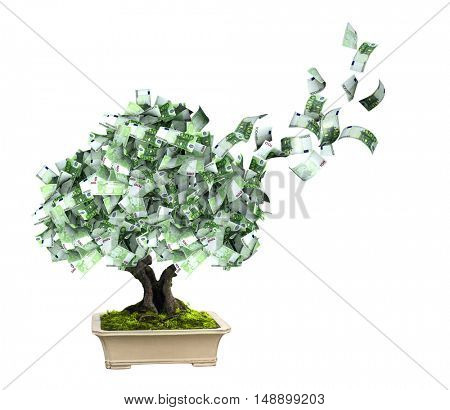 3d money tree with euro banknotes. Isolated on white background. 3d render