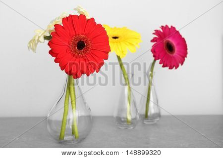 Vases with gerbera flowers on grey background