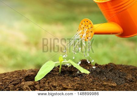Water pouring from watering can on plant in garden