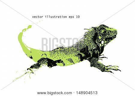 Vector illustration of an iguana. Hand drawn.