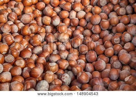 Heap of fresh raw hazelnuts.