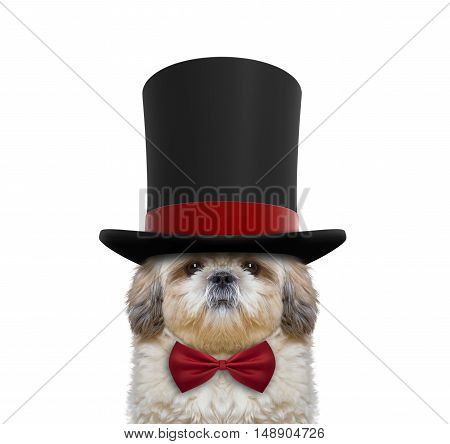 Cute dog in a high hat cylinder and necktie -- isolated on white