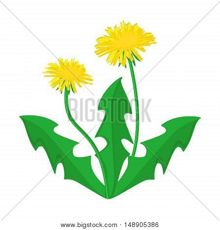 Vector illustration summer flower yellow dandelion. Dandelion vector icon logo.
