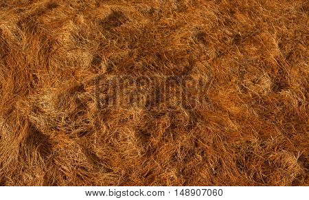 Dry Grass straw texture on the floor