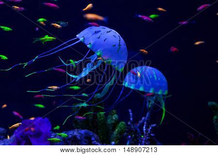 Jellyfish and colored fish under water on the sea floor.