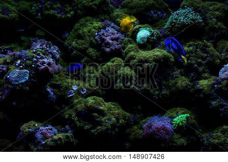 Fish and vegetation in the grass at the bottom of the sea.