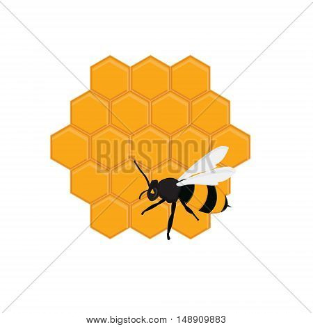 Vector illustration honey bee on honeycomb. Bee on honey cells. Honey comb