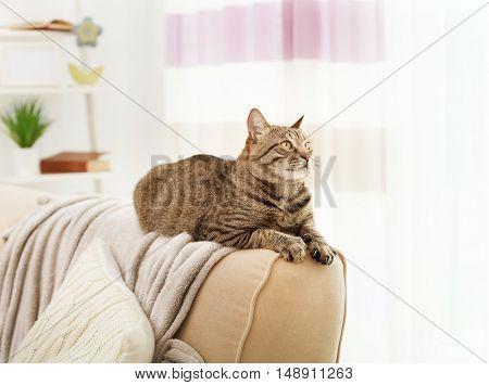 Grey tabby cat lying on sofa backrest