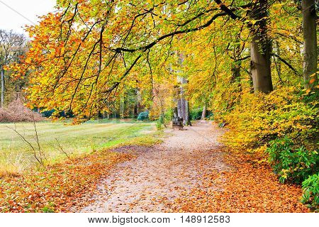 European fall landscape with footpath and beech tree leaves