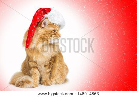 Big ginger maine coon cat in christmas cap sitting and looking to the side. Circle gradient red background with falling snow. Copy space.