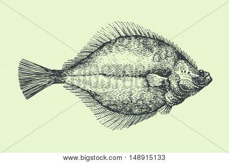 Seafood Label. Premium illustration with Flounder. Hand drawn