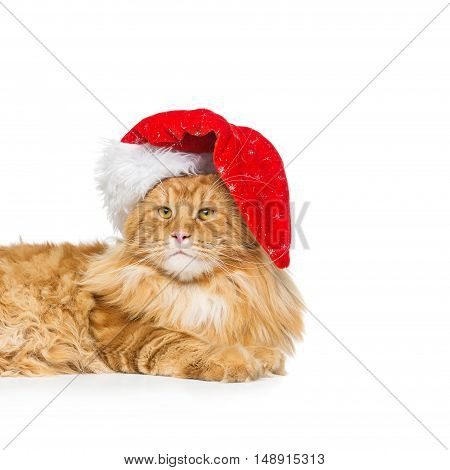 Big ginger maine coon cat in christmas santa cap. Isolated on white background. Copy space. Square composition.