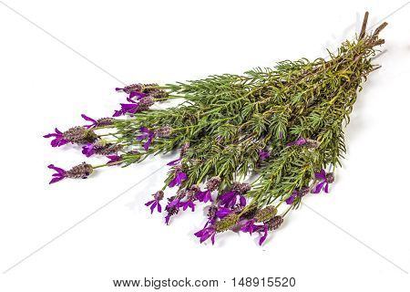 Bunch Of Flowering Purple Lavender Plant Stems On White