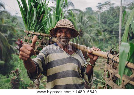 Happy Senior Farmer Giving Thumbs Up