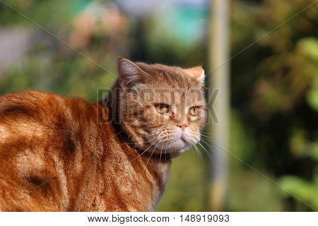 cat wearing a collar sitting on a tree stump