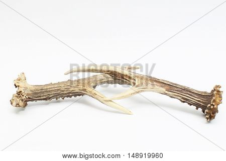 Deer horns isolated on the white background.