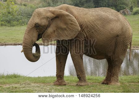 a close up view of an adult elephant