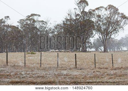 Snow Falling Tasmania
