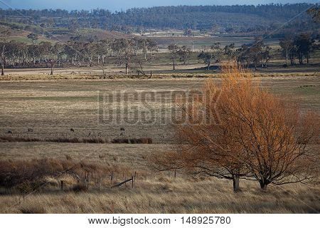 Views Of Rural Tasmania