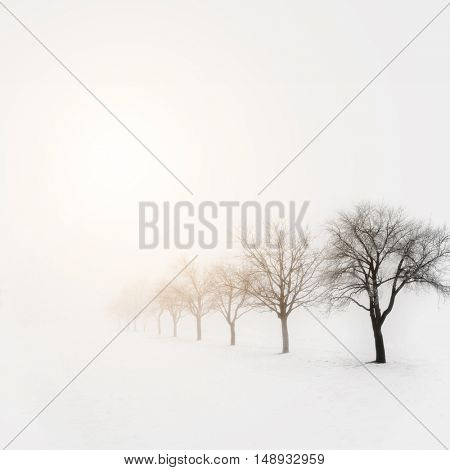 Trees in snow on a cold winter day
