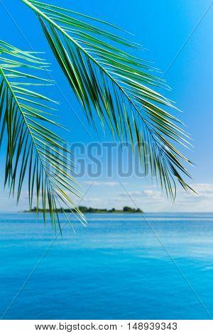 Landscape Resort Palm