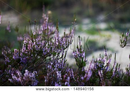 flowers, nature, greenery, forest, leaves, purple, summer