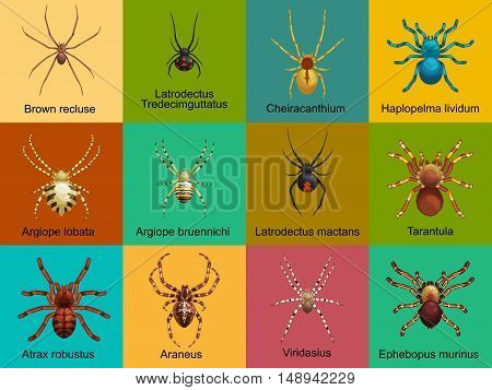Flat spiders cartoon scary symbols and spiders insect flat design. Set of flat spiders cartoon colored icons vector illustration isolated on white background. Spider vector. Spider icons isolated
