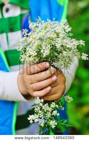 Bouquet Of Wild White Flowers In The Hands Of A Child