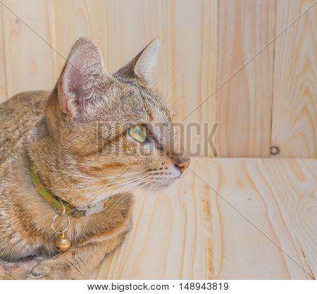 Cat On Wood Background
