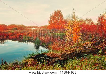 Autumn landscape in soft vintage colors - blue autumn river in foggy weather. Autumn vintage landscape view. Autumn foggy landscape of autumn nature with yellowed autumn trees near forest autumn river