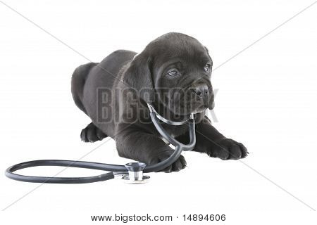 Doggy With A Stethoscope On His Neck, Isolated On White