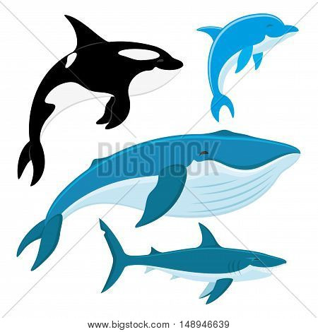 Killer whale, dolphin, whale, shark on a white background.