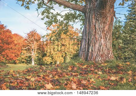 Autumn Scenery With A Large Tree
