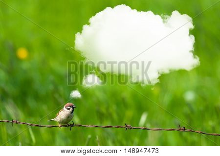 Daydreaming Bird On Barb Wire
