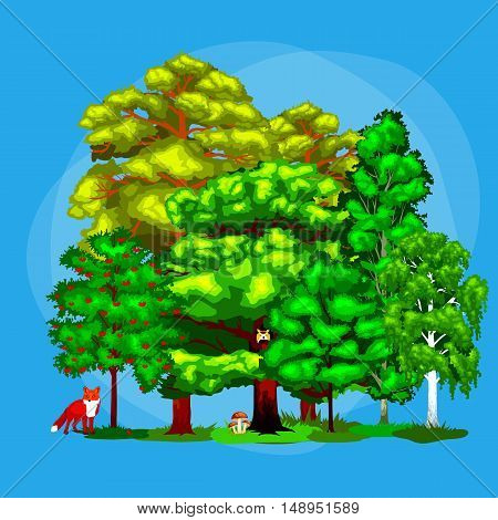 Wild forest trees, plants and animals.Pine Tree with branch and leafs in the wild forest outdoors. Isolated ecology natural wood. Forest green trees on grass bush in summer landscape background.