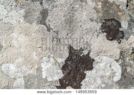a full frame abstract overgrown lichen surface