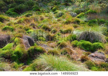 Peat bog moss in Poland Bieszczady National Park