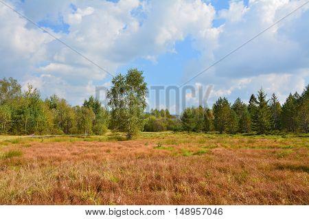 Peat Bog In Polish Mountains